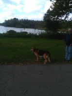 Walking at the lake