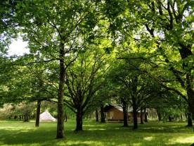 safari tent 2