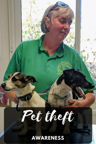 Grand daze tips for keeping your dogs safe from pet theft