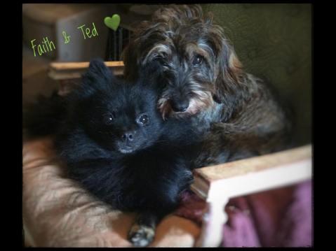 Teddy & Faith